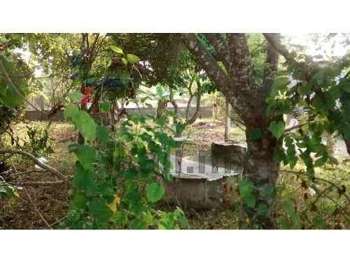 se vende terreno, en la colonia las delicias en la calle las chacas entre las calles cedro y chote de la ciudad de tuxpan veracruz es un terreno que tiene arboles frutales asi como también tiene un p