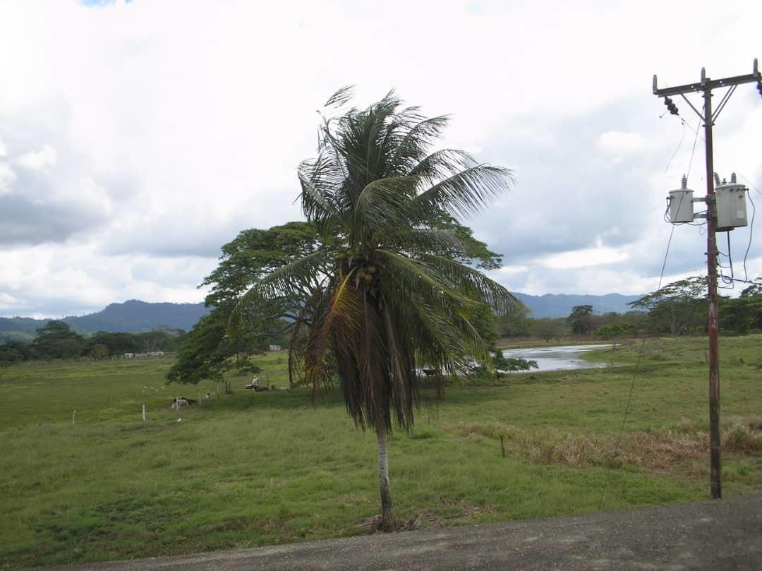 se venden dos fincas en yaracal 38 hectareas 04166462234