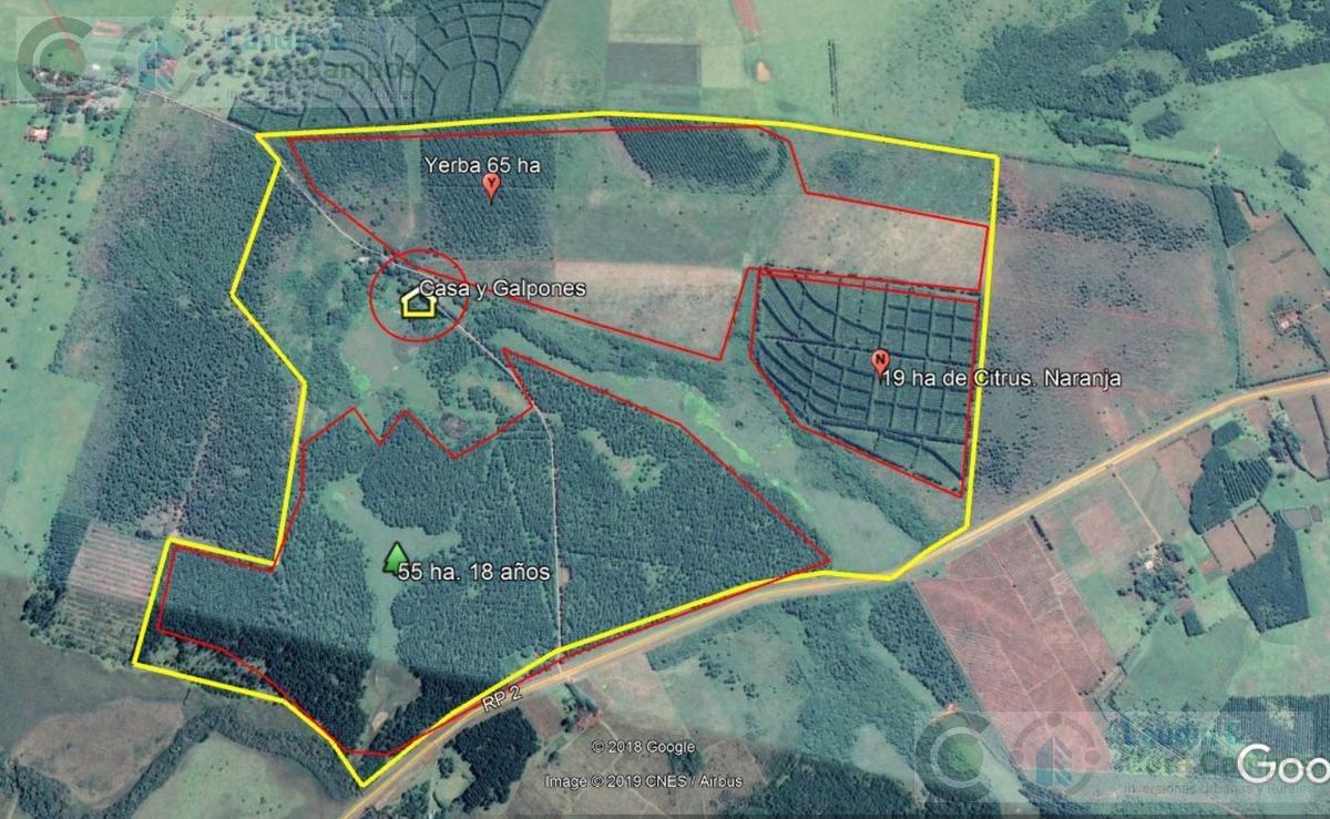 se venta campo con yerba y pino - sobre  asfalto- apóstoles misiones 250 ha