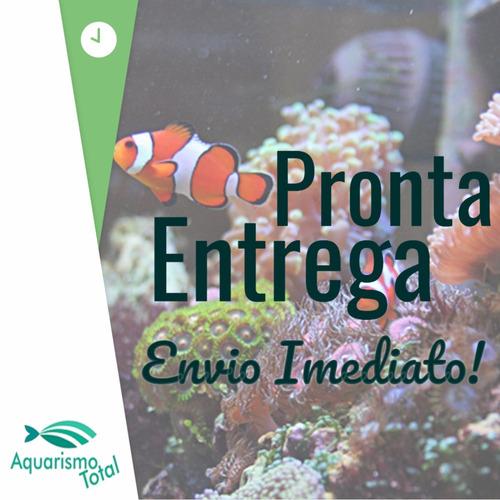 seachem reef strontium 250ml estrôncio aquário marinho coral