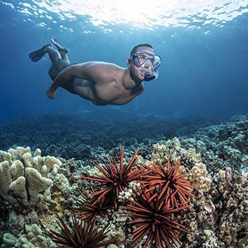 seavenger diving dry top snorkel set con aleta trek, máscara