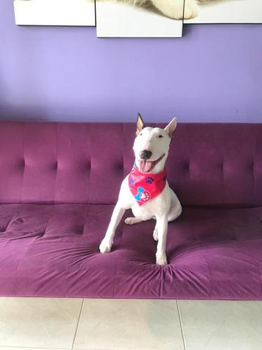 seciones de especialista en comportamiento canino