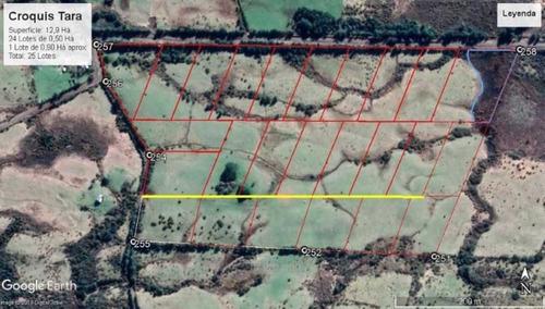 sector de tara comuna de chonchi, región