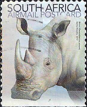 selo rinoceronte zignauko sertr