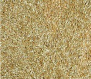 semente alpiste (granel 5k) para passáros frete grátis