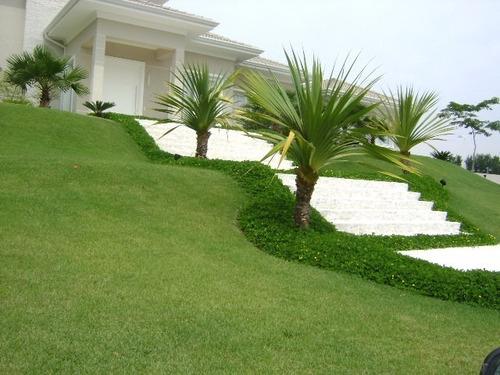 semente de grama esmeralda 4000g para 4000m² - frete gratis