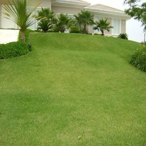 semente de grama esmeralda 5000g para 5000m² - frete gratis