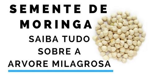 semente de moringa  oleifera 3000 sementes alta germinação.