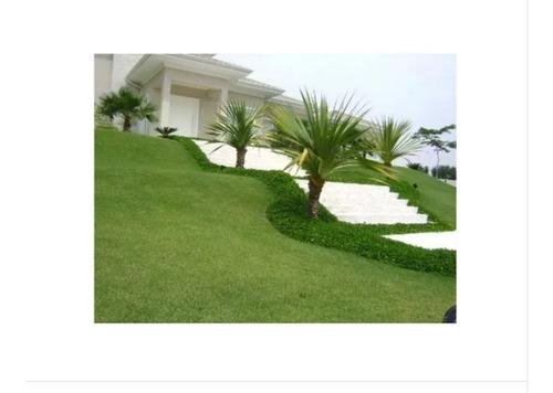 semente grama esmeralda 1000g para 1000m²  #61bh