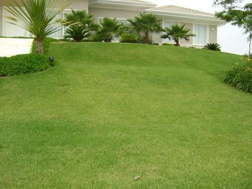 semente grama esmeralda 100g para 100m²- melhor preço