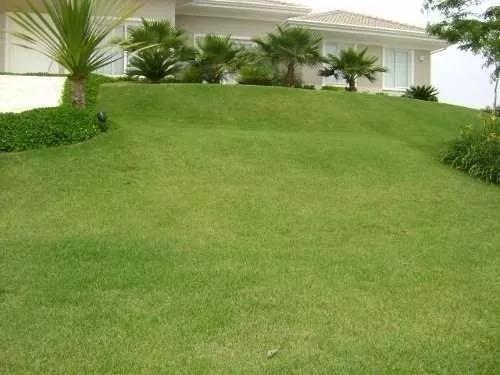 semente grama esmeralda 1kg para 5,000m²