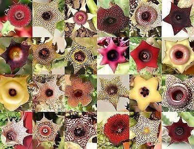 sementes 250 suculentas mini cacto - (frete grátis)