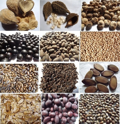 sementes árvores nativas da mata atlântica