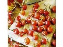 sementes da pimenta piãozinho frete grátis