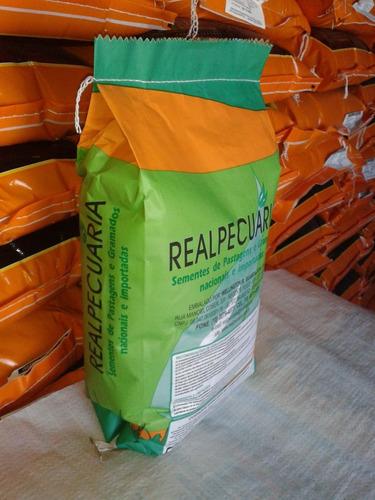 sementes de amendoim forrageiro -  embalagem de 500g