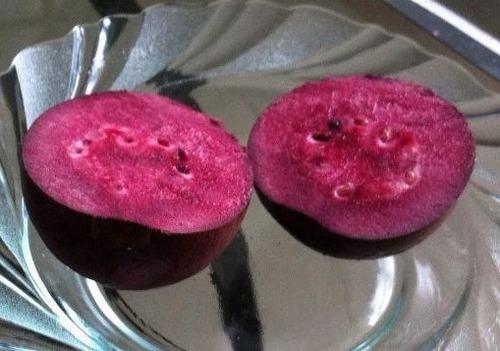 sementes de goiaba roxa africana purple de frutas p/ mudas