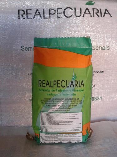 sementes de grama batatais (mato grosso) pacote com 1 kg