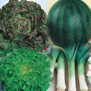 sementes de hortaliças - a sua escolha - kit 06 variedades