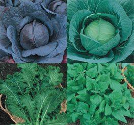 sementes de hortaliças - a sua escolha - kit 12 variedades