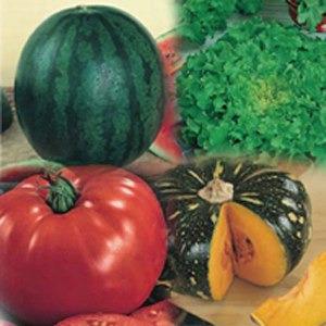sementes de hortaliças - a sua escolha - kit 24 variedades