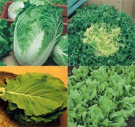 sementes de hortaliças a sua escolha - kit com 12 variedades