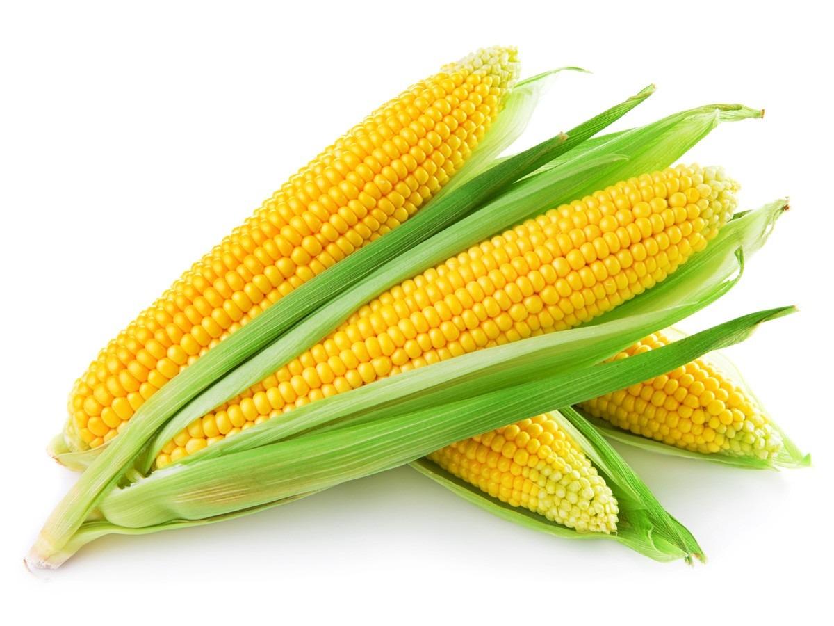 Resultado de imagem para milho verde