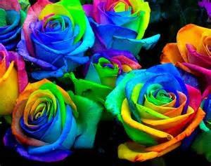 sementes de rosas arco-íris
