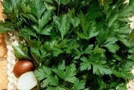 sementes de salsa grauda portuguesa