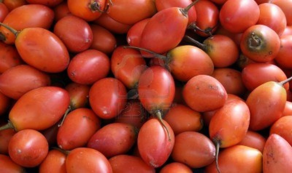 sementes de tamarillo tomate de rvore tree tomatoes r 8 00 em mercado livre. Black Bedroom Furniture Sets. Home Design Ideas