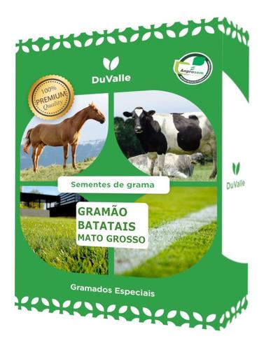sementes grama batatais gramão pastagem jardim campo - 5 kg