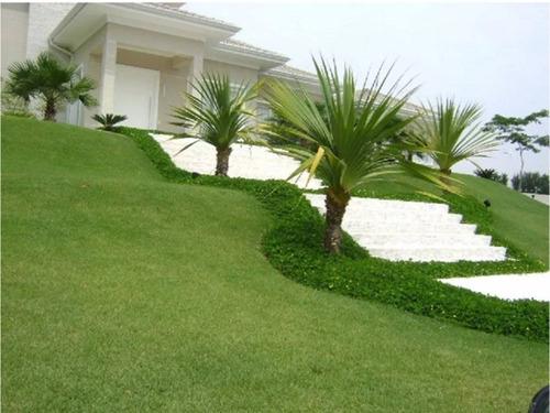 sementes grama esmeralda 200g para 200m² # envio imediato