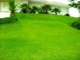 sementes grama jardim