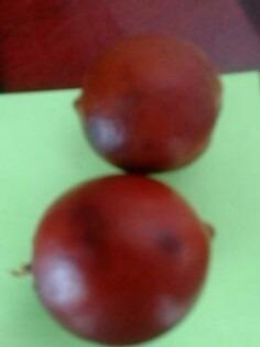 sementes para mudas de juá-ssú laranja raríssimo