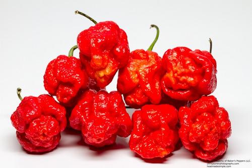 sementes pimenta trinidad scorpion + carolina reaper 100 und