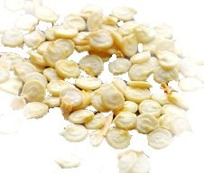 sementes  pimenta trinidad scorpion morouga + bhut jolokia