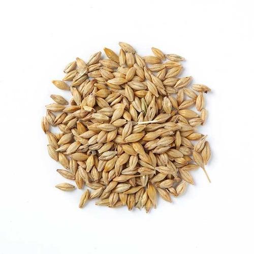 semilla cebada 4.5 kg forrajera pastos