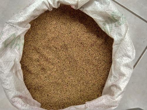 semilla de alfalfa recien cosechada