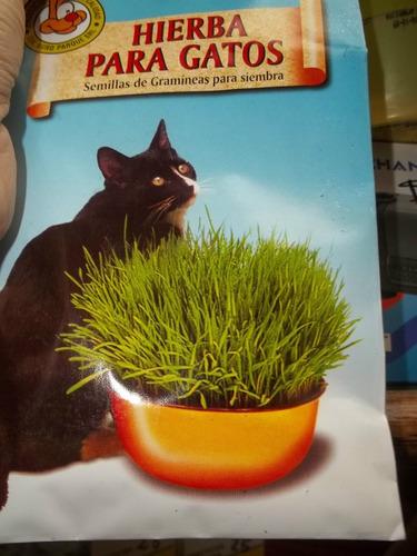 semilla de hierba para gato los aromos net