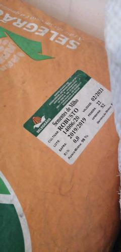 semilla de pasto certificadashumidicola, mulatos, y mombaza.