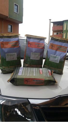 semilla de pasto decumbens  alta pureza