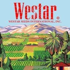 semilla de patilla jubilee x 100 gr westar