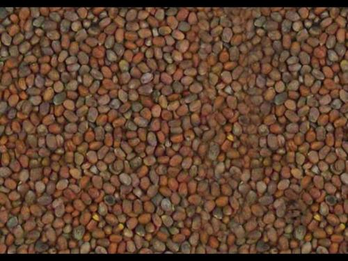 semilla de rábano 100 gr 220 pesos/envío gratis