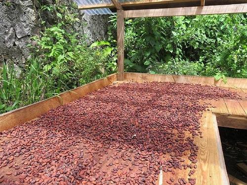 semilla grano de cacao oaxaqueño orgánico criollo 1kg