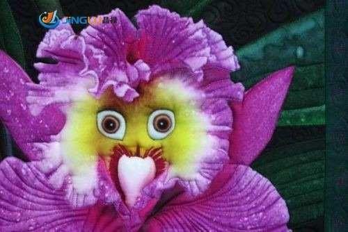 semilla orquidea mariposa flores raras 10 semillas