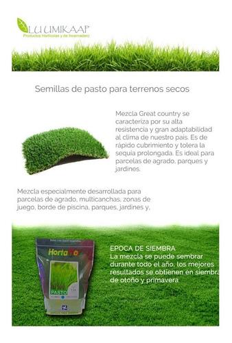 semilla para pasto tierra seca 500 gramos (envío gratis)
