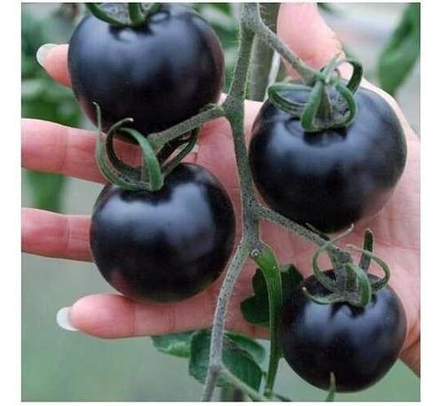 semilla tomate negro indigo rose semillas raras 20 unidades