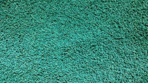 semillas cesped bermuda picasso 25kg - calidad garantizada