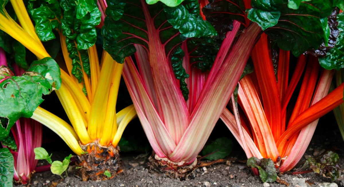 Image result for acelgas colores
