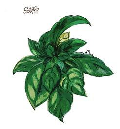 semillas de albahaca genovesa 2g