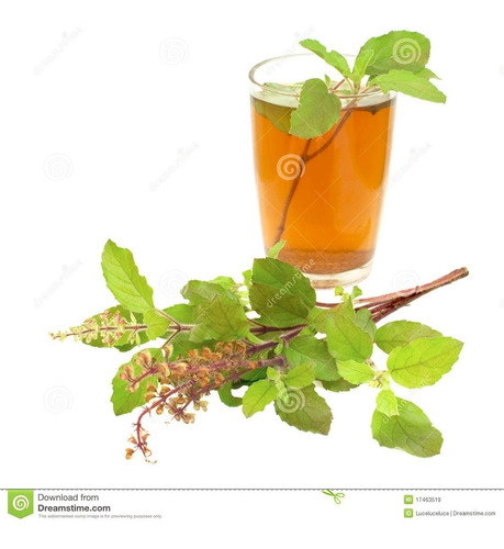 semillas de albahaca tulsi variedad kapoor albahaca sagrada